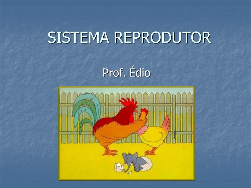 SISTEMA REPRODUTOR Prof. Édio