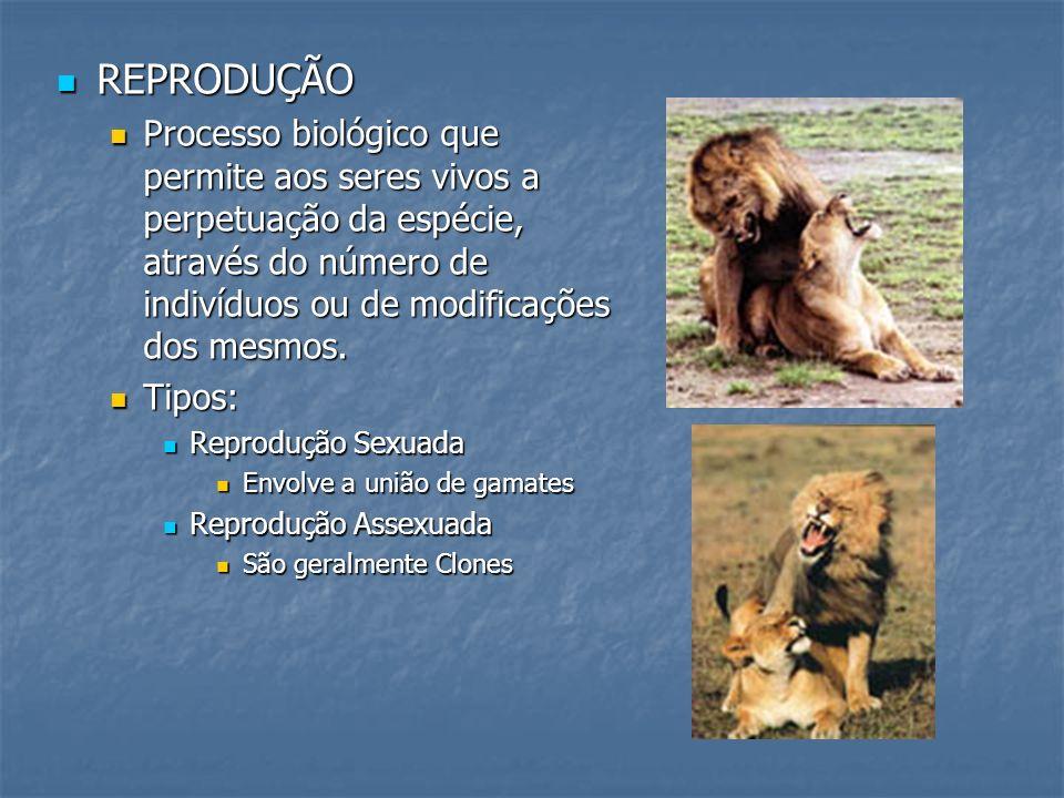 REPRODUÇÃO Processo biológico que permite aos seres vivos a perpetuação da espécie, através do número de indivíduos ou de modificações dos mesmos.