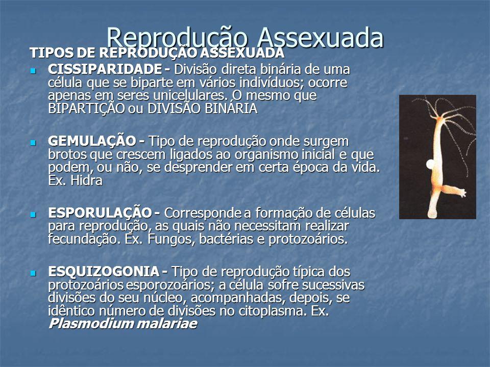 Reprodução Assexuada TIPOS DE REPRODUÇÃO ASSEXUADA