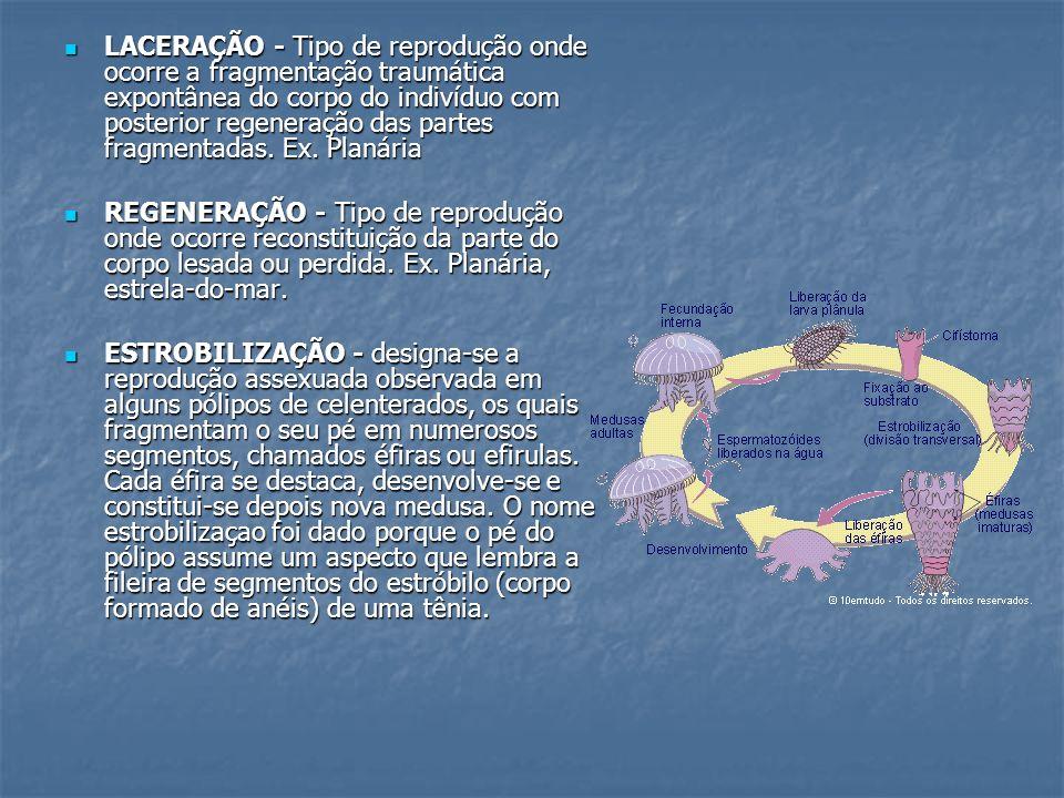 LACERAÇÃO - Tipo de reprodução onde ocorre a fragmentação traumática expontânea do corpo do indivíduo com posterior regeneração das partes fragmentadas. Ex. Planária