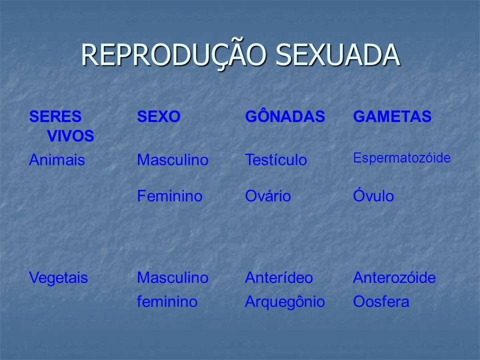 REPRODUÇÃO SEXUADA SERES VIVOS SEXO GÔNADAS GAMETAS Animais Masculino