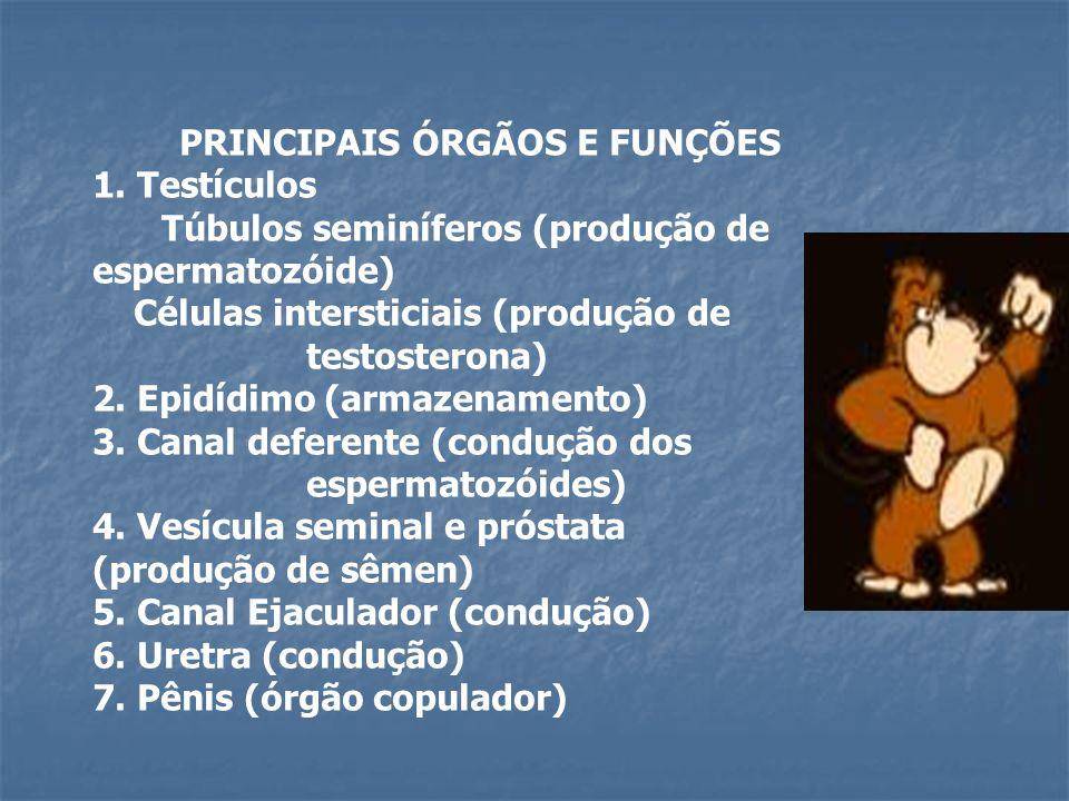 PRINCIPAIS ÓRGÃOS E FUNÇÕES