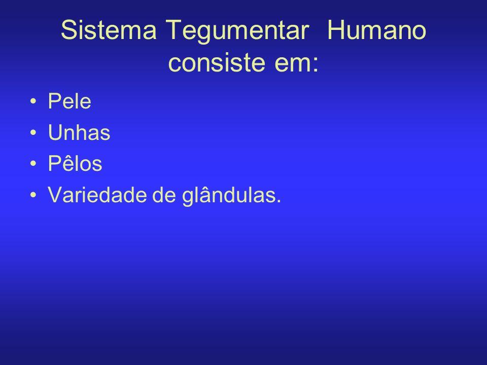 Sistema Tegumentar Humano consiste em: