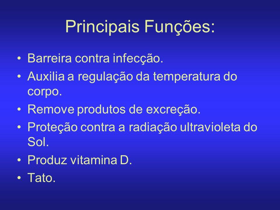 Principais Funções: Barreira contra infecção.