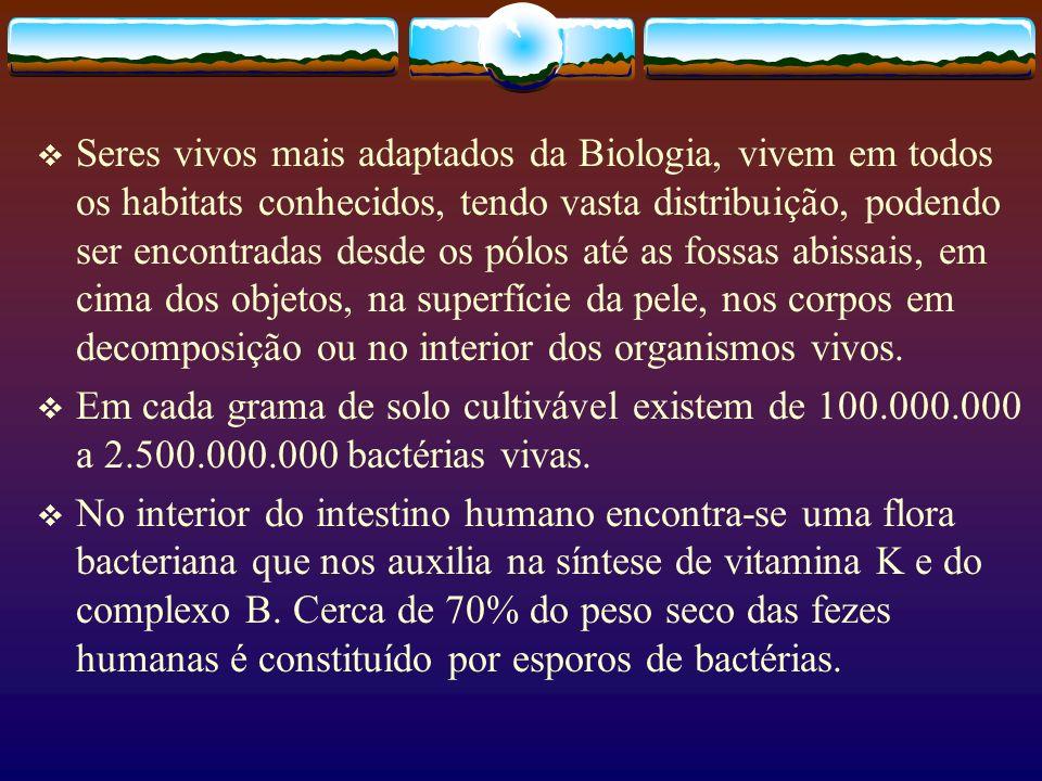 Seres vivos mais adaptados da Biologia, vivem em todos os habitats conhecidos, tendo vasta distribuição, podendo ser encontradas desde os pólos até as fossas abissais, em cima dos objetos, na superfície da pele, nos corpos em decomposição ou no interior dos organismos vivos.