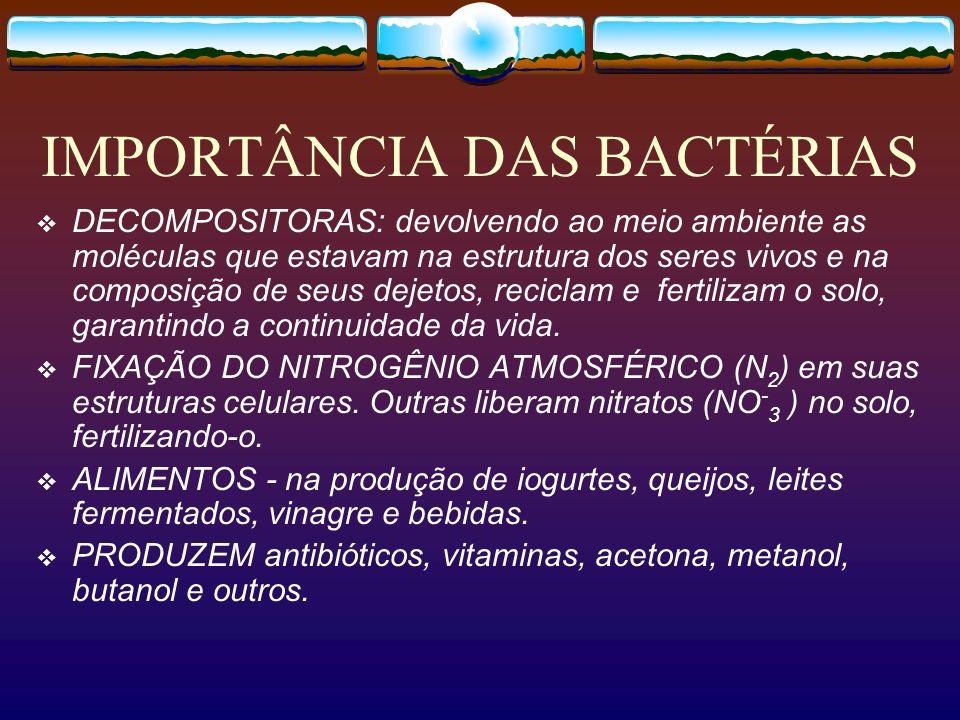 IMPORTÂNCIA DAS BACTÉRIAS