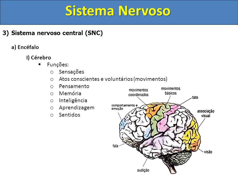 Sistema Nervoso Sistema nervoso central (SNC) a) Encéfalo I) Cérebro