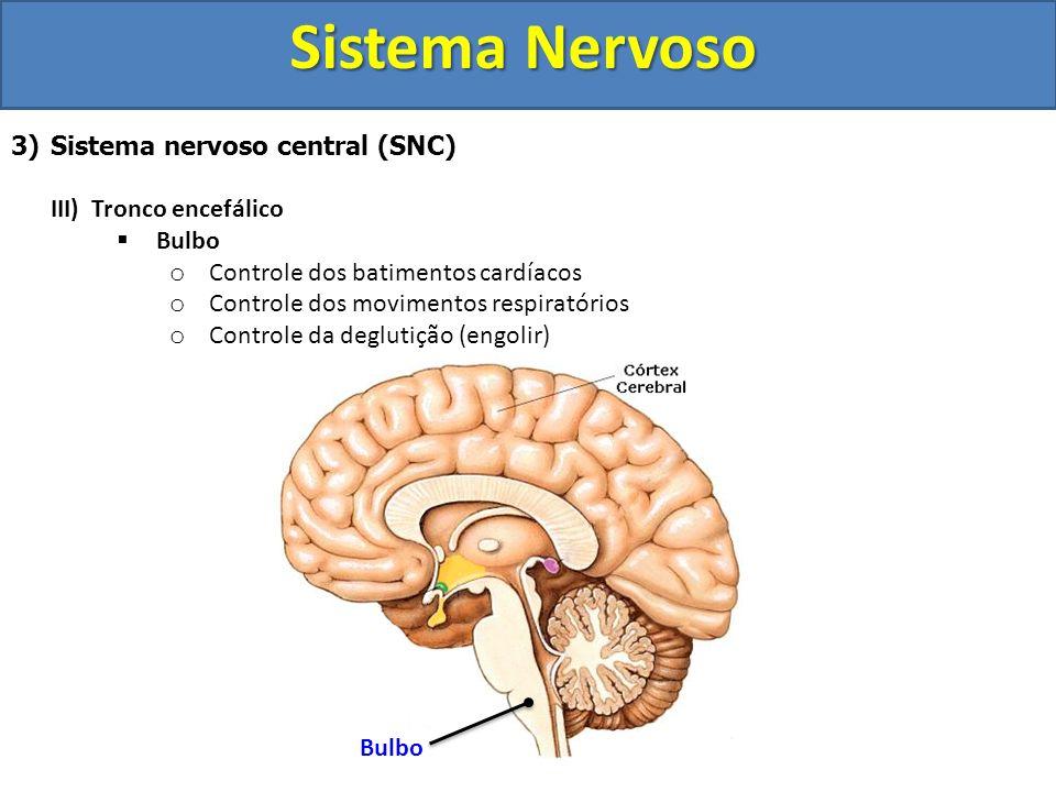 Sistema Nervoso Sistema nervoso central (SNC) III) Tronco encefálico