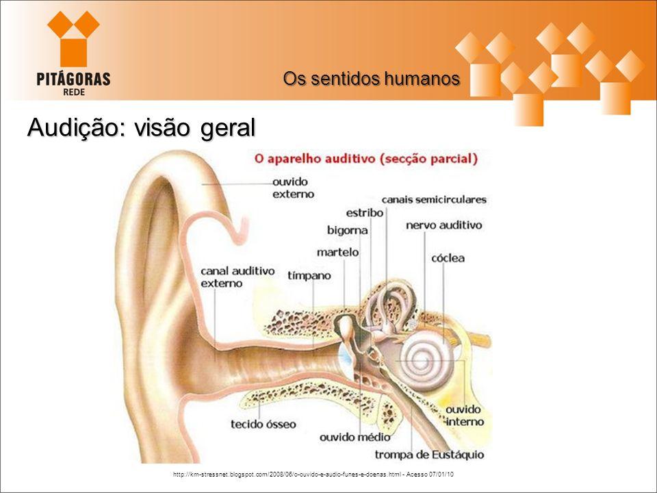 Audição: visão geral Os sentidos humanos