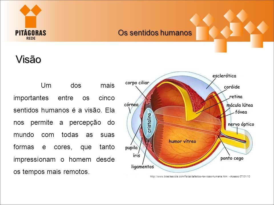 Visão Os sentidos humanos