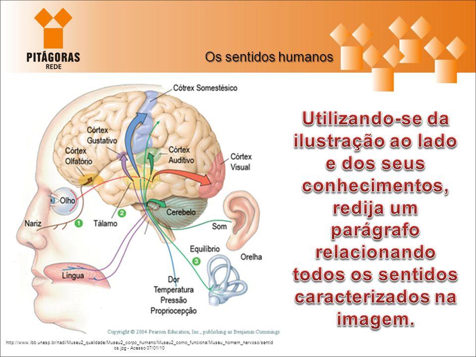Os sentidos humanos