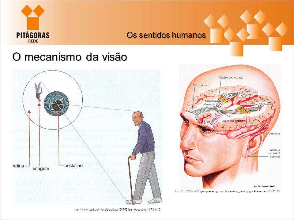 O mecanismo da visão Os sentidos humanos