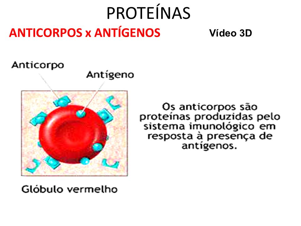 PROTEÍNAS ANTICORPOS x ANTÍGENOS Vídeo 3D