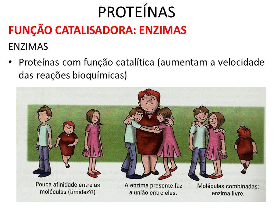PROTEÍNAS FUNÇÃO CATALISADORA: ENZIMAS ENZIMAS