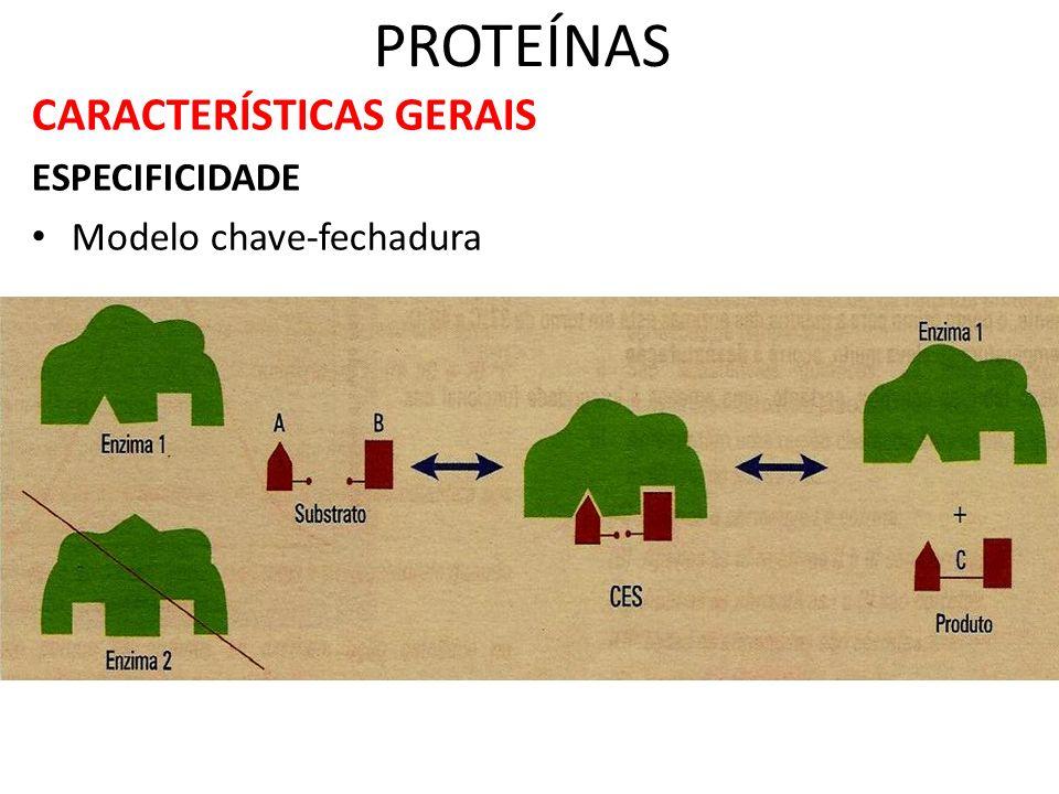 PROTEÍNAS CARACTERÍSTICAS GERAIS ESPECIFICIDADE Modelo chave-fechadura