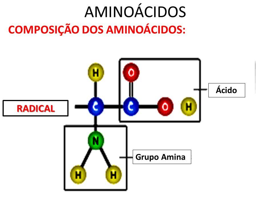 AMINOÁCIDOS COMPOSIÇÃO DOS AMINOÁCIDOS: Ácido RADICAL Grupo Amina