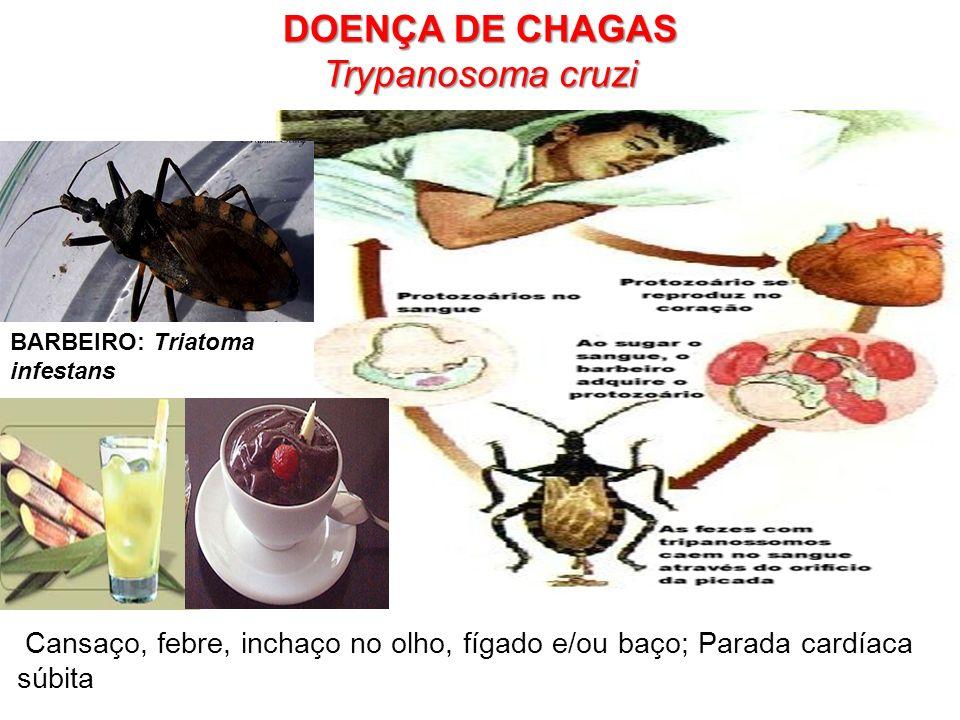 DOENÇA DE CHAGAS Trypanosoma cruzi