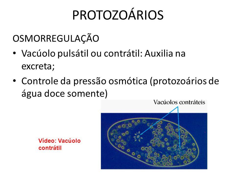 PROTOZOÁRIOS OSMORREGULAÇÃO