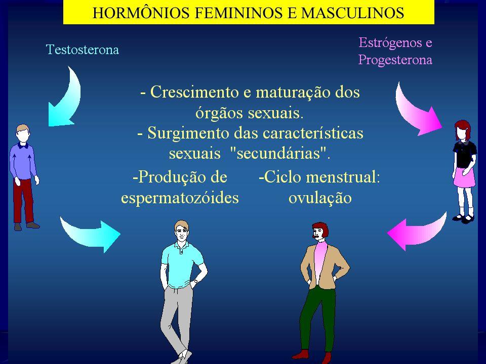 HORMÔNIOS FEMININOS E MASCULINOS