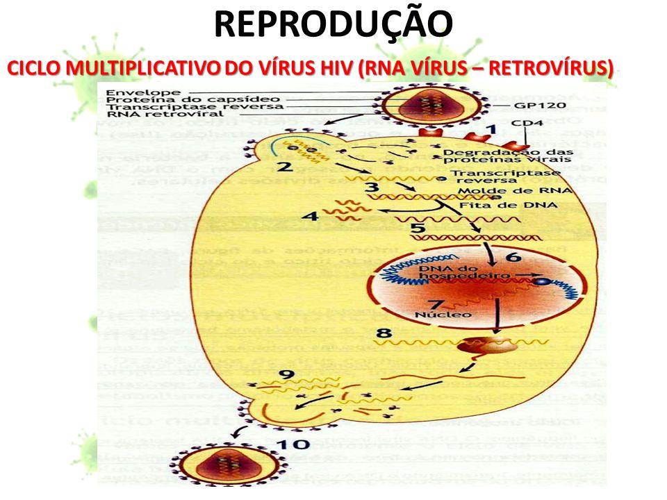 CICLO MULTIPLICATIVO DO VÍRUS HIV (RNA VÍRUS – RETROVÍRUS)