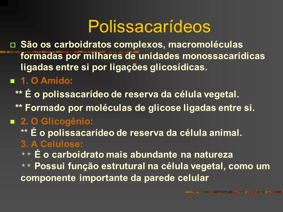 Polissacarídeos