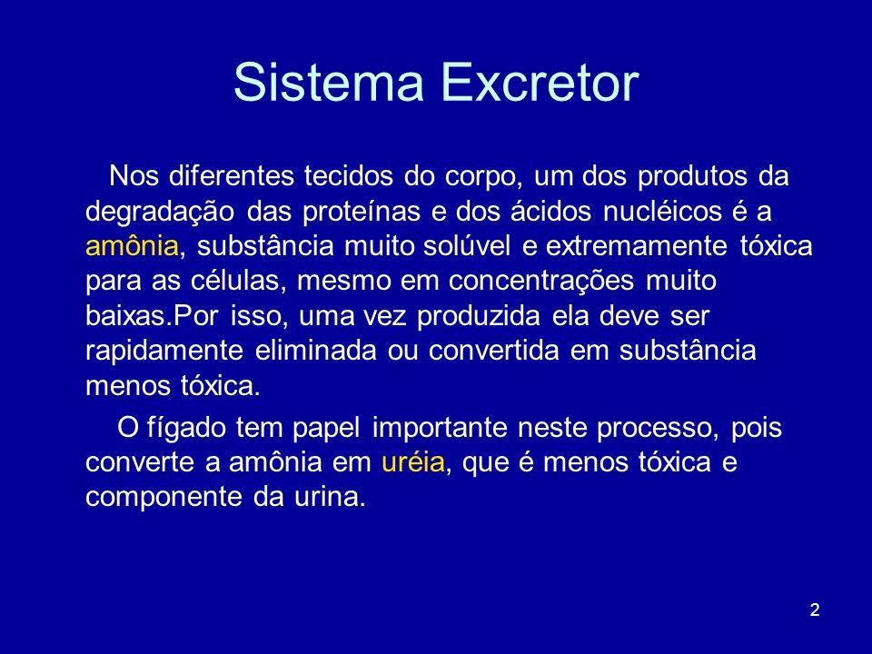 Sistema Excretor