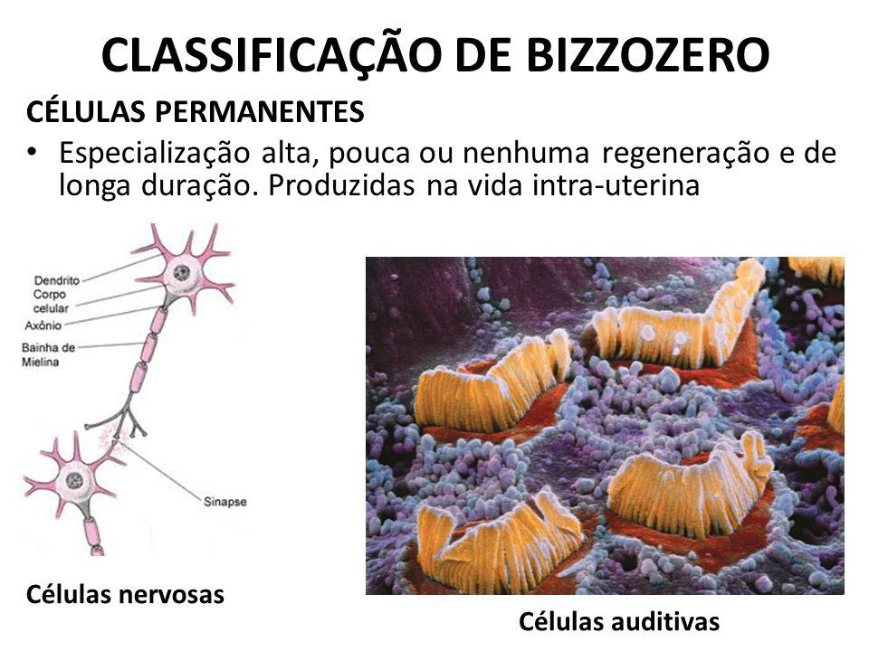 CLASSIFICAÇÃO DE BIZZOZERO