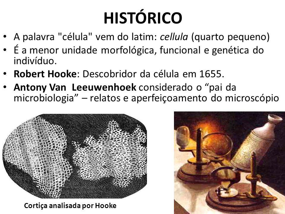 HISTÓRICO A palavra célula vem do latim: cellula (quarto pequeno)