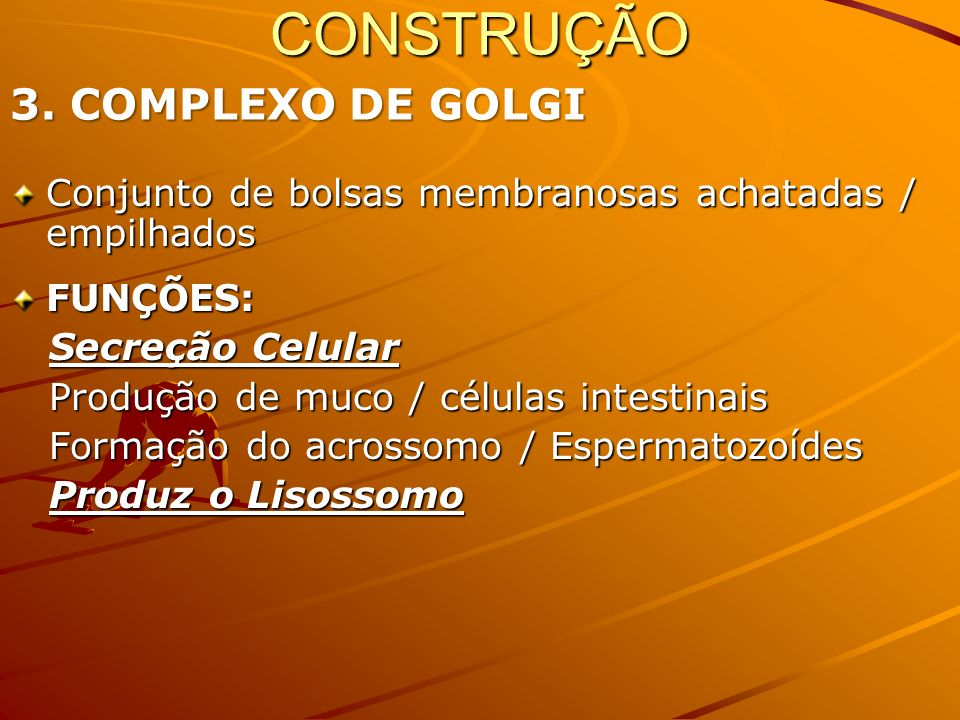 CONSTRUÇÃO 3. COMPLEXO DE GOLGI