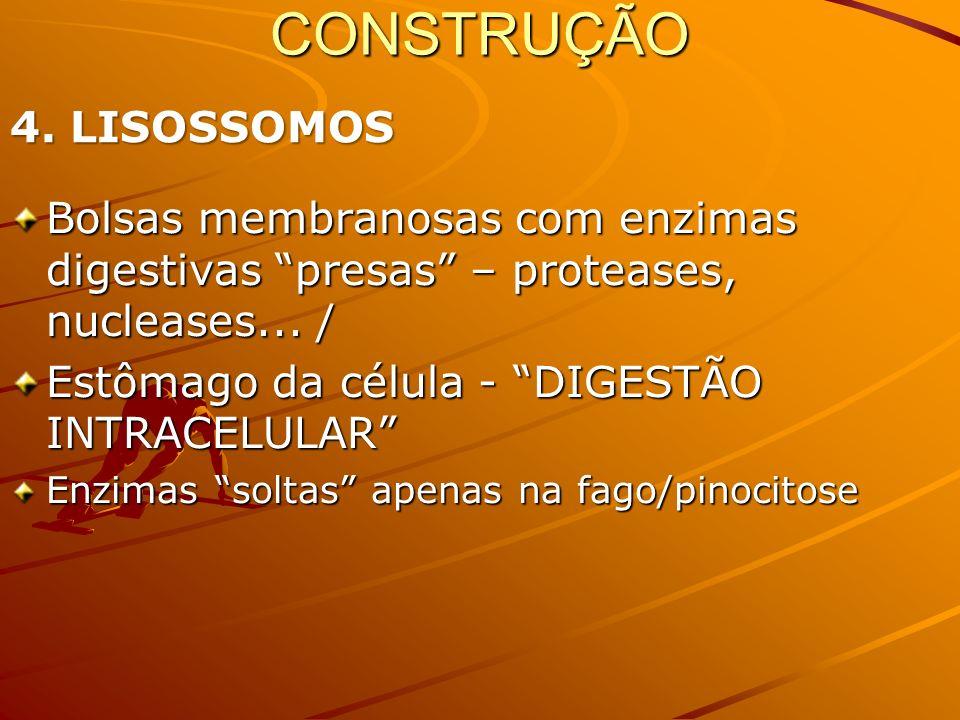 CONSTRUÇÃO 4. LISOSSOMOS