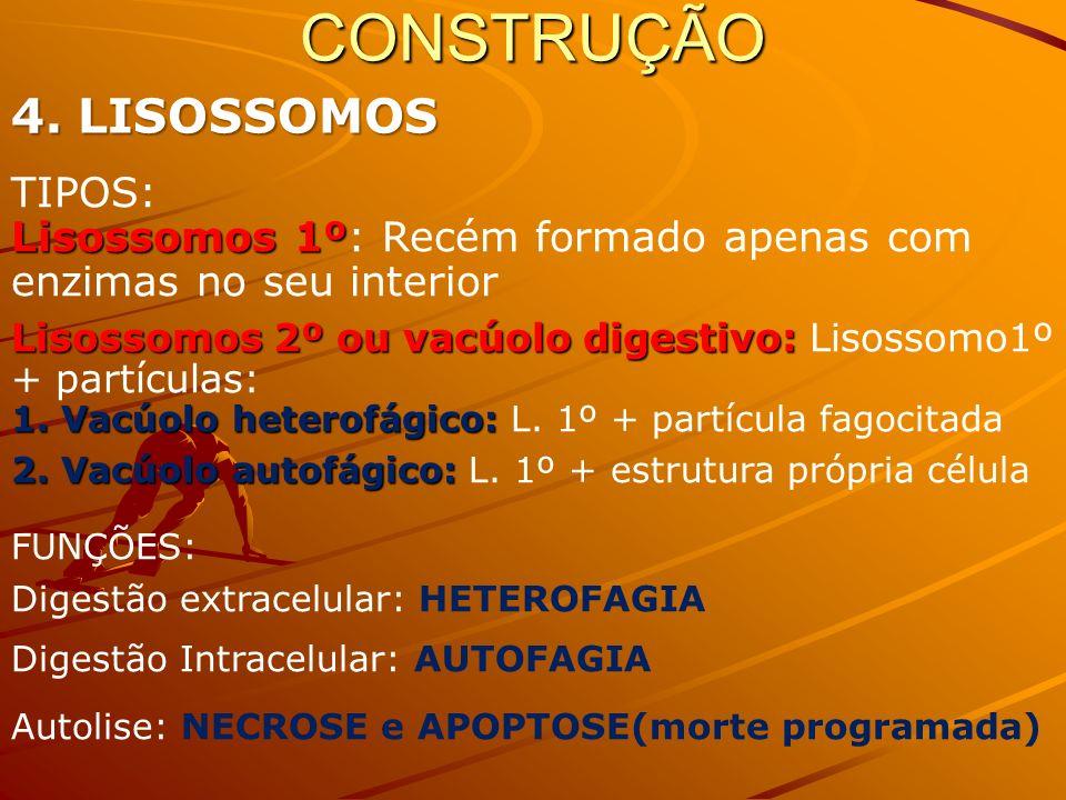 CONSTRUÇÃO 4. LISOSSOMOS TIPOS: