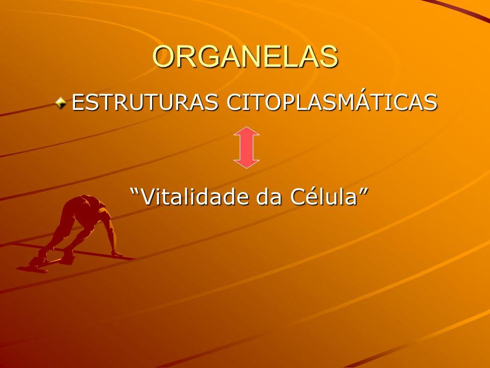 ORGANELAS ESTRUTURAS CITOPLASMÁTICAS Vitalidade da Célula