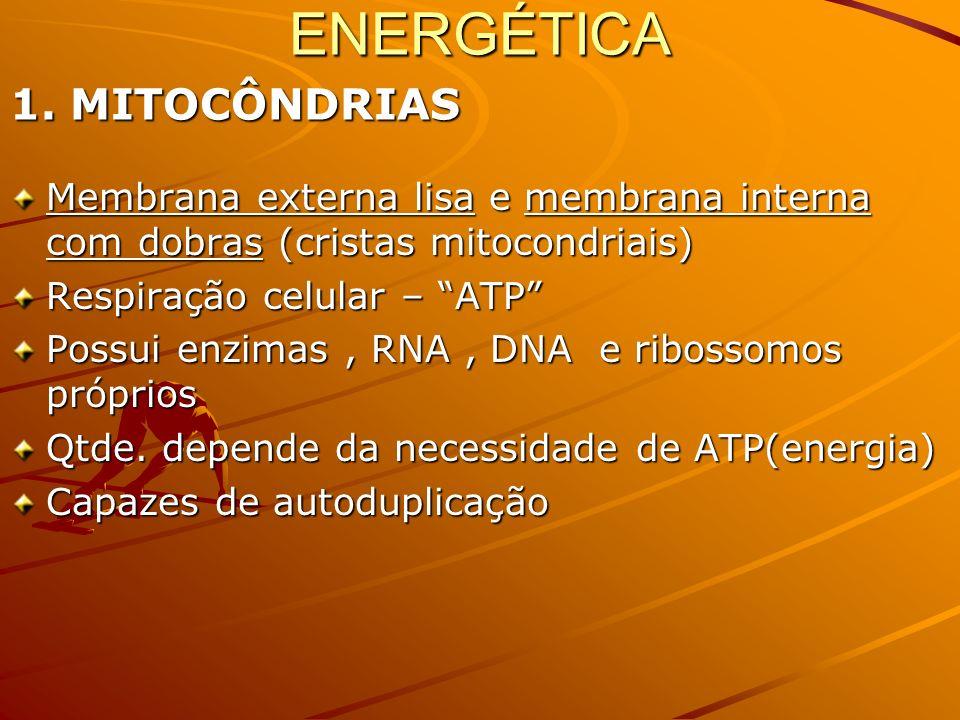 ENERGÉTICA 1. MITOCÔNDRIAS
