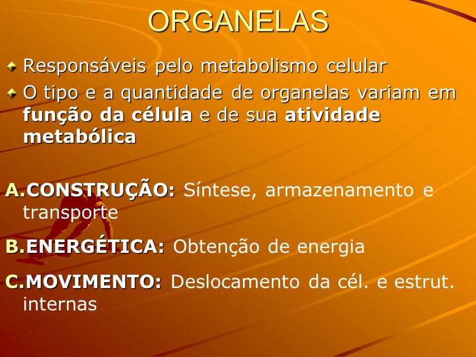 ORGANELAS Responsáveis pelo metabolismo celular