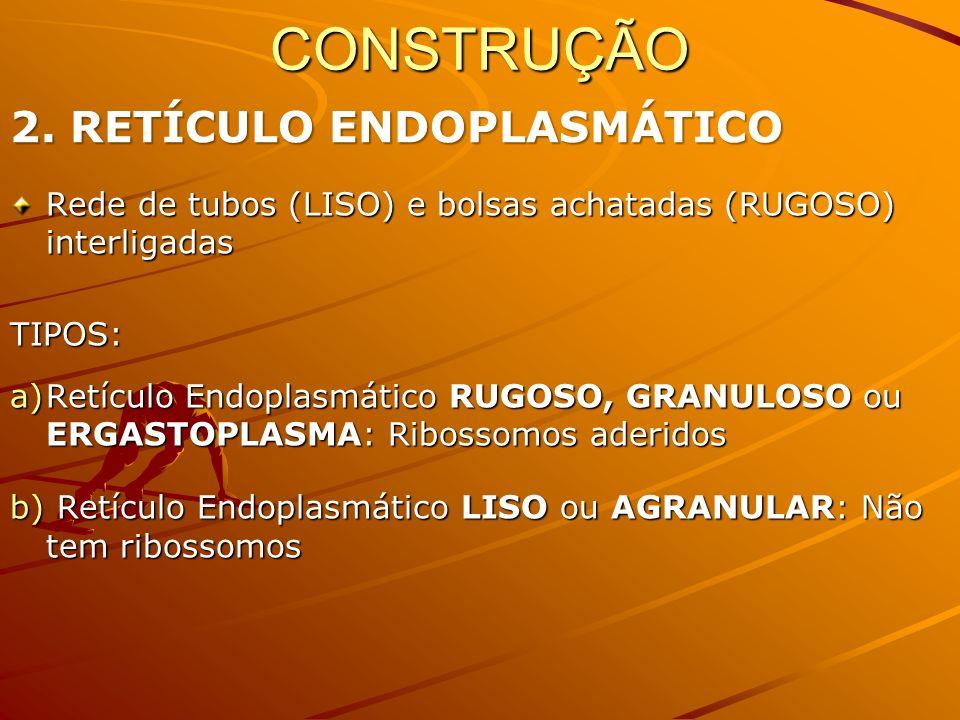 CONSTRUÇÃO 2. RETÍCULO ENDOPLASMÁTICO