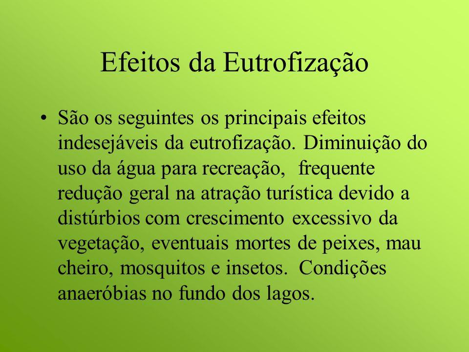 Efeitos da Eutrofização