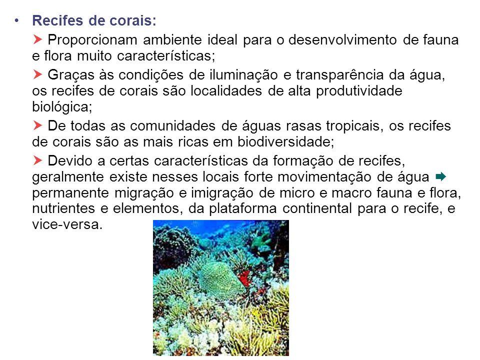 Recifes de corais:  Proporcionam ambiente ideal para o desenvolvimento de fauna e flora muito características;