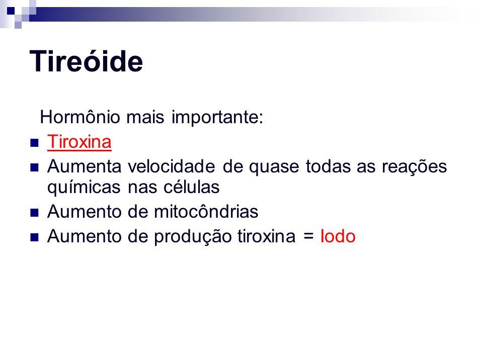 Tireóide Hormônio mais importante: Tiroxina