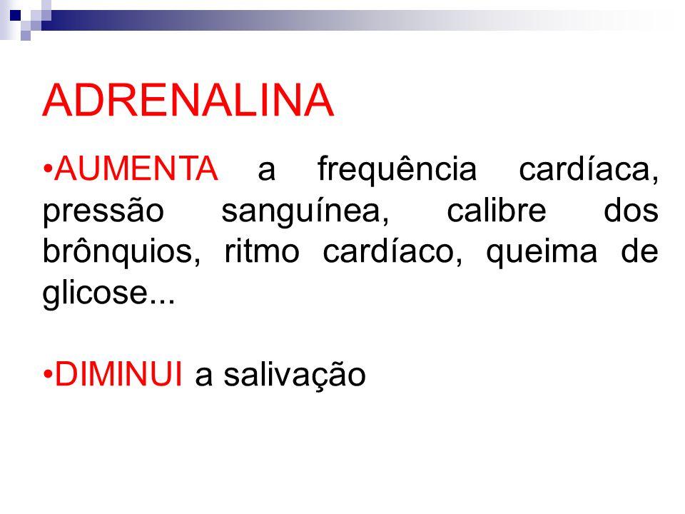 ADRENALINA AUMENTA a frequência cardíaca, pressão sanguínea, calibre dos brônquios, ritmo cardíaco, queima de glicose...