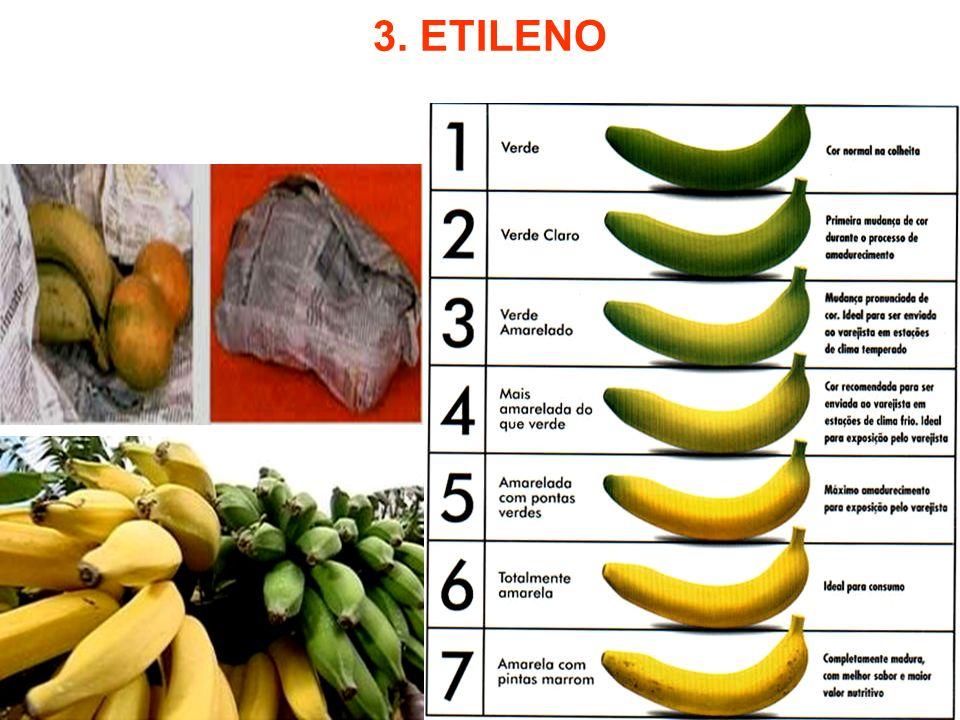 3. ETILENO