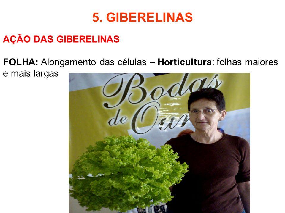 5. GIBERELINAS AÇÃO DAS GIBERELINAS