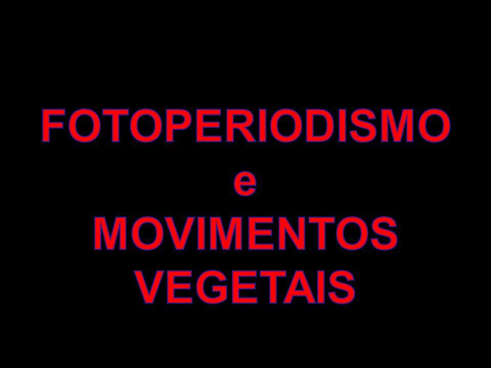 FOTOPERIODISMO e MOVIMENTOS VEGETAIS