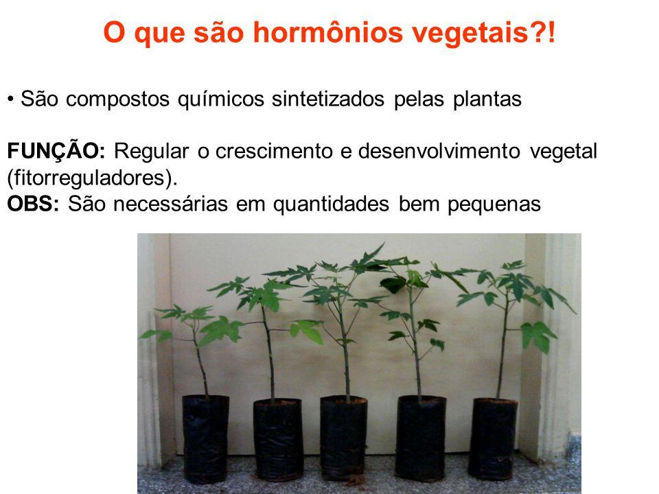 O que são hormônios vegetais !