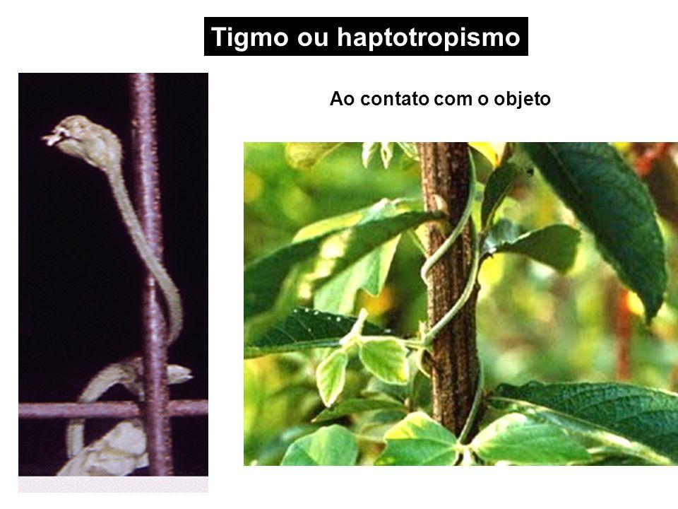 Tigmo ou haptotropismo
