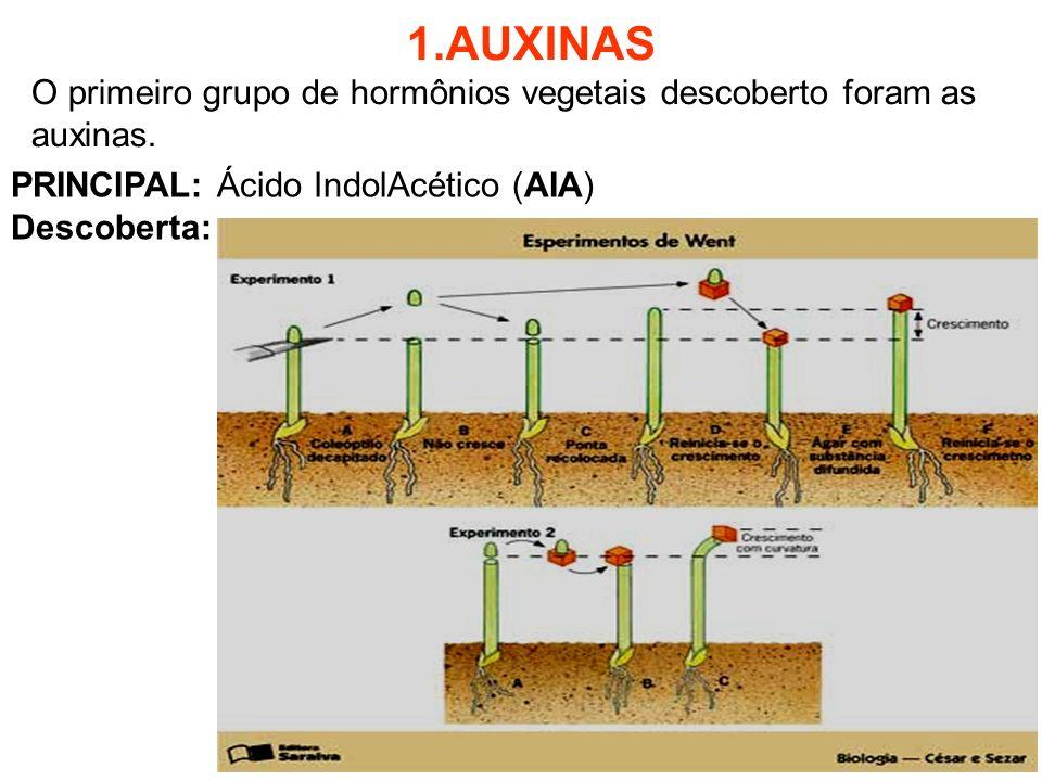 1.AUXINAS O primeiro grupo de hormônios vegetais descoberto foram as auxinas. PRINCIPAL: Ácido IndolAcético (AIA)