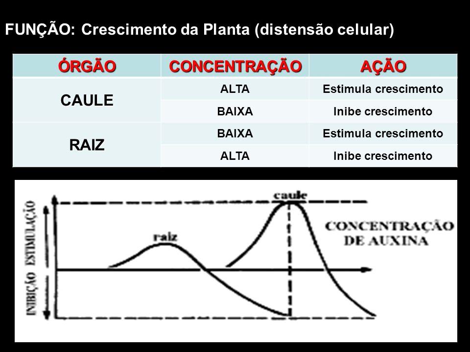 ÓRGÃO CONCENTRAÇÃO AÇÃO CAULE RAIZ