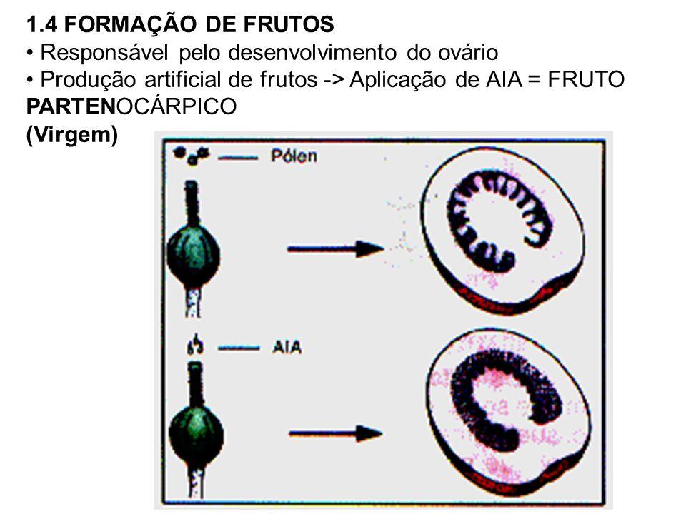 1.4 FORMAÇÃO DE FRUTOS Responsável pelo desenvolvimento do ovário. Produção artificial de frutos -> Aplicação de AIA = FRUTO PARTENOCÁRPICO.