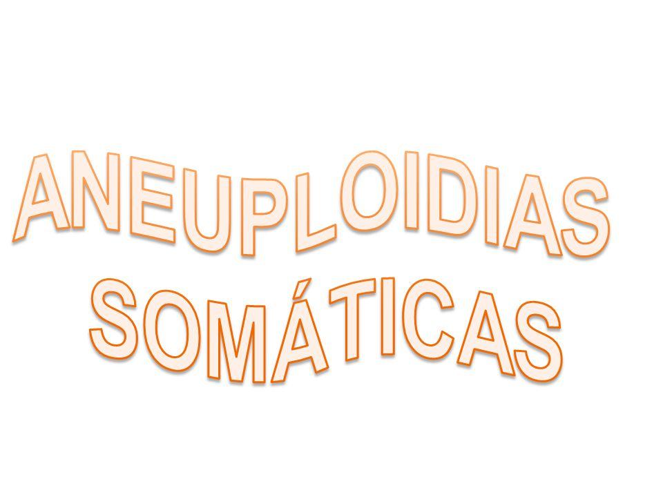 ANEUPLOIDIAS SOMÁTICAS