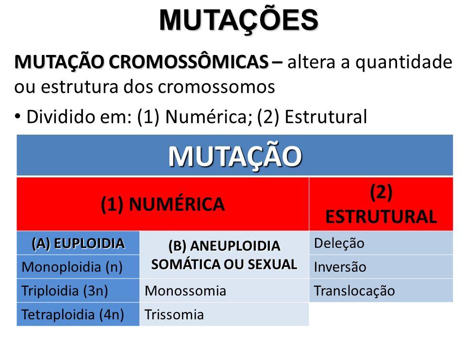 MUTAÇÕES MUTAÇÃO CROMOSSÔMICAS – altera a quantidade ou estrutura dos cromossomos. Dividido em: (1) Numérica; (2) Estrutural.