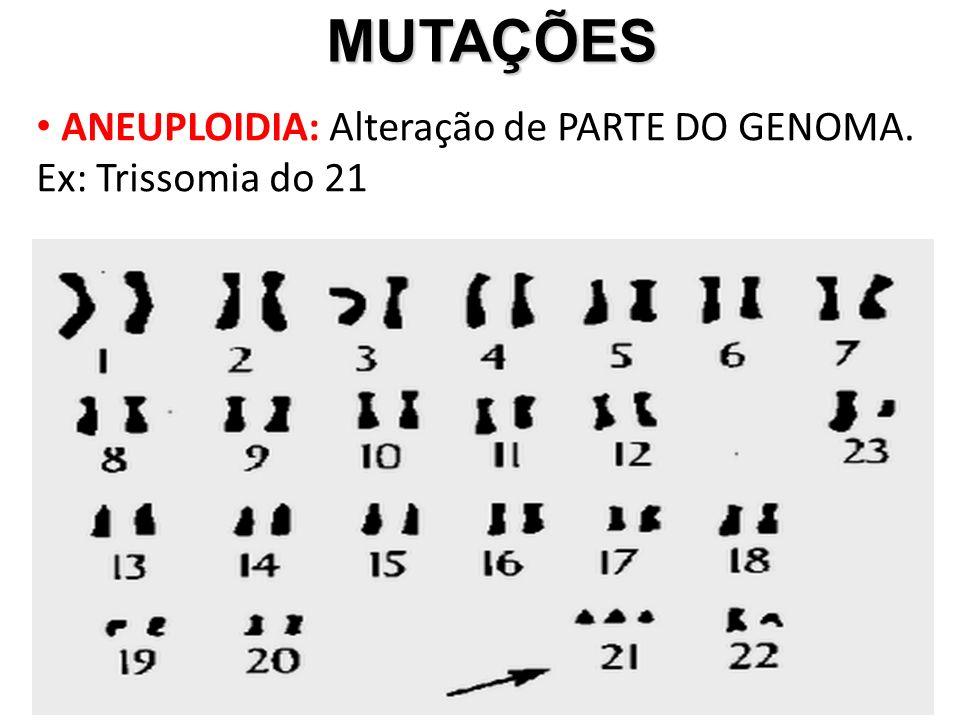 MUTAÇÕES ANEUPLOIDIA: Alteração de PARTE DO GENOMA. Ex: Trissomia do 21